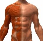 para-ganar-musculo
